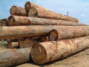 Wood_log_